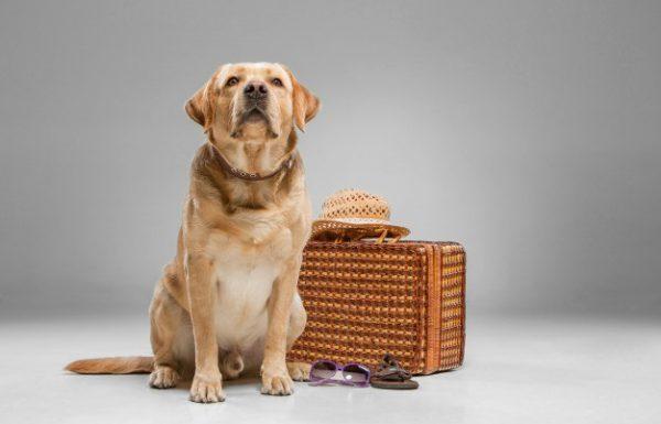 גם לכלבכם מגיעה חופשה מפנקת